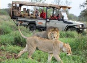 African Safari, Kenya Culture, Culture Tour, Culinary experience